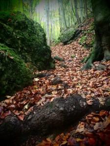 Der Trail vor der Haustüre